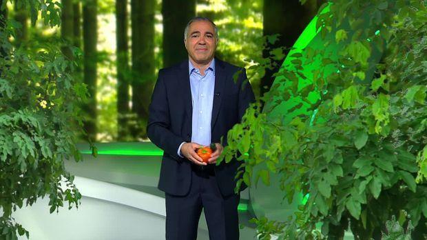 Galileo - Galileo - Mittwoch: Was Bäume Zu Superhelden Macht