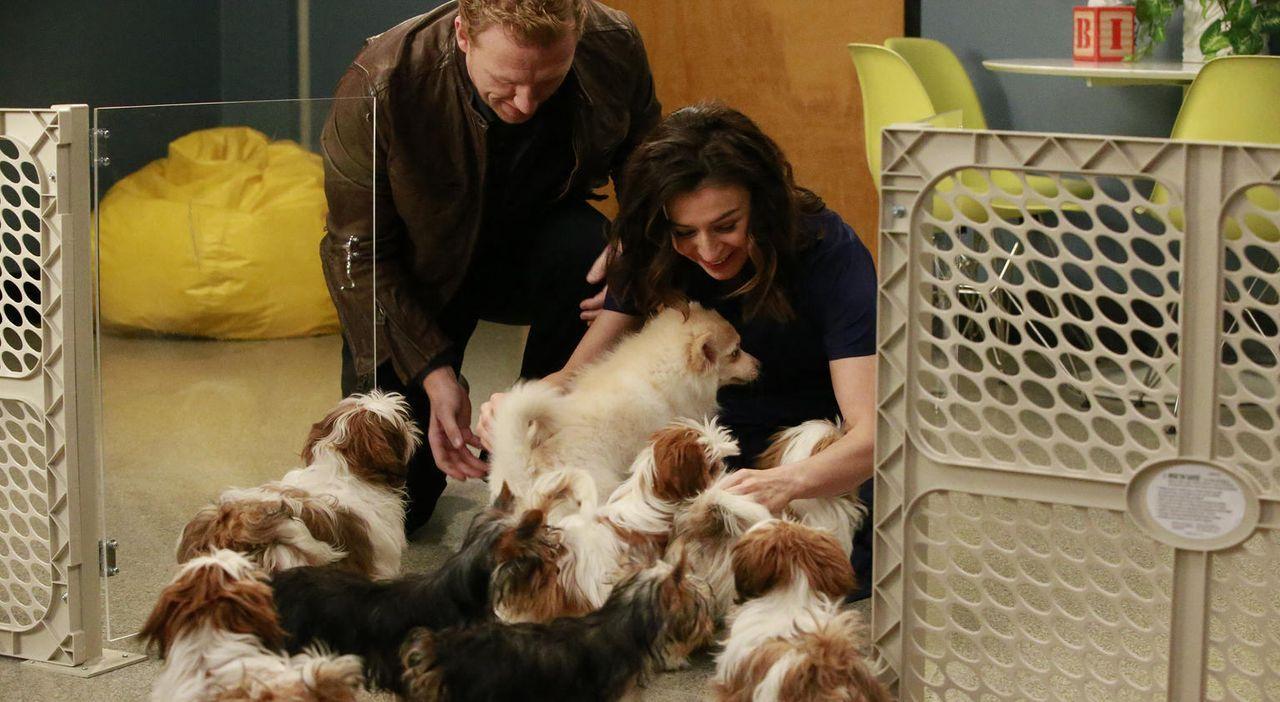 Während April vor einer schwierigen Entscheidung steht, hat Owen eine ganz besondere Überraschung für Amelia - Bildquelle: Mitchell Haaseth ABC Studios