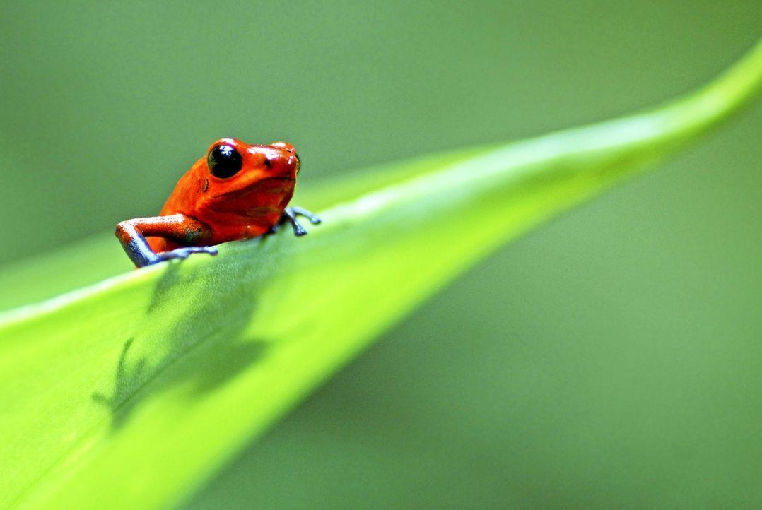 """Egal, ob Flügel oder Flossen, acht oder zwei Beine - """"Unser Leben"""" nimmt den Zuschauer auf eine einzigartige Reise an die schönsten Orte der Welt mi... - Bildquelle: Edwin Giesbers / naturepl.com"""