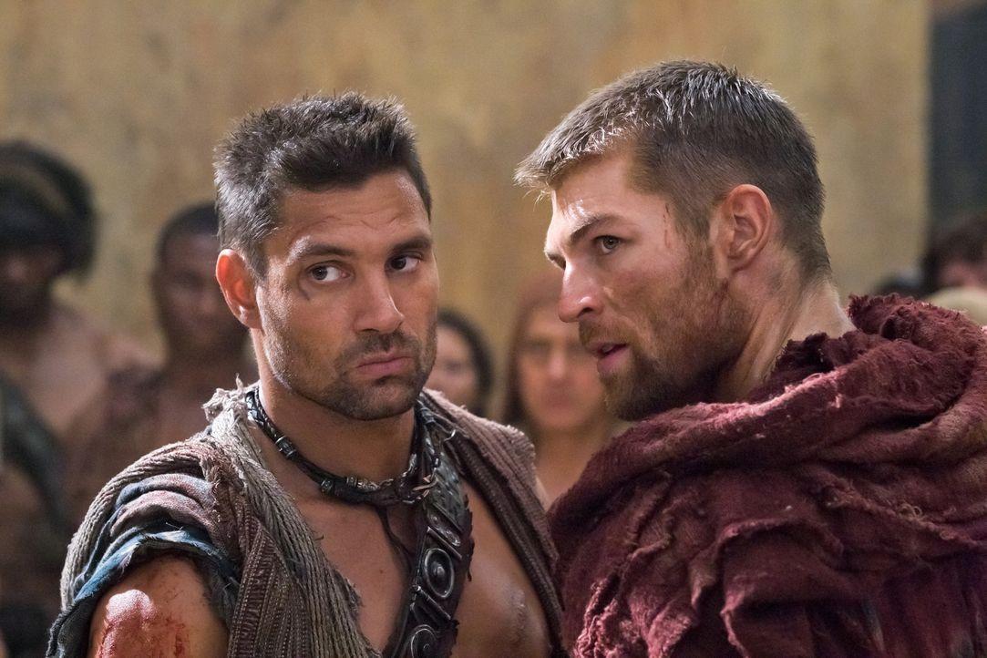 Als der inzwischen zum Praetor Roms aufgestiegene Glaber nach Capua entsandt wird, um Spartacus (Liam McIntyre), Crixus ( Manu Bennett) und ihre Mä... - Bildquelle: 2011 Starz Entertainment, LLC. All rights reserved.