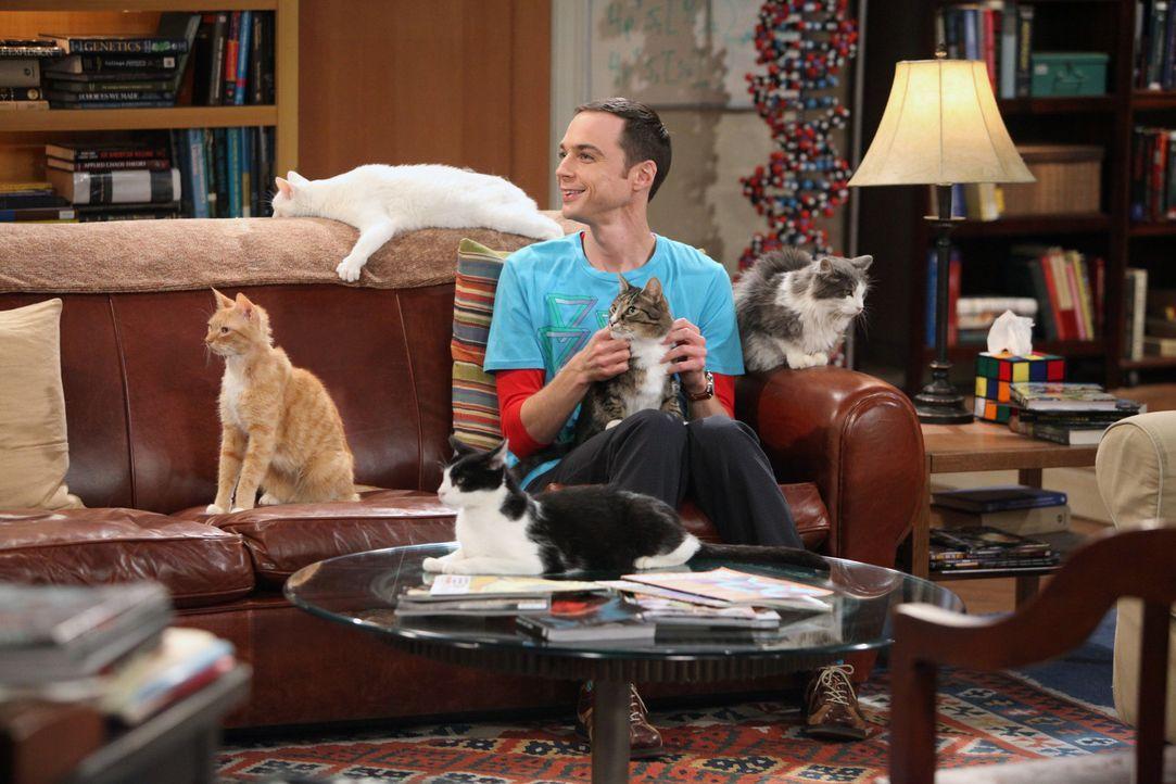 Nach der Trennung von Amy kauft sich Sheldon (Jim Parsons) eine Katze - doch es bleibt nicht bei einer ... - Bildquelle: Warner Bros. Television