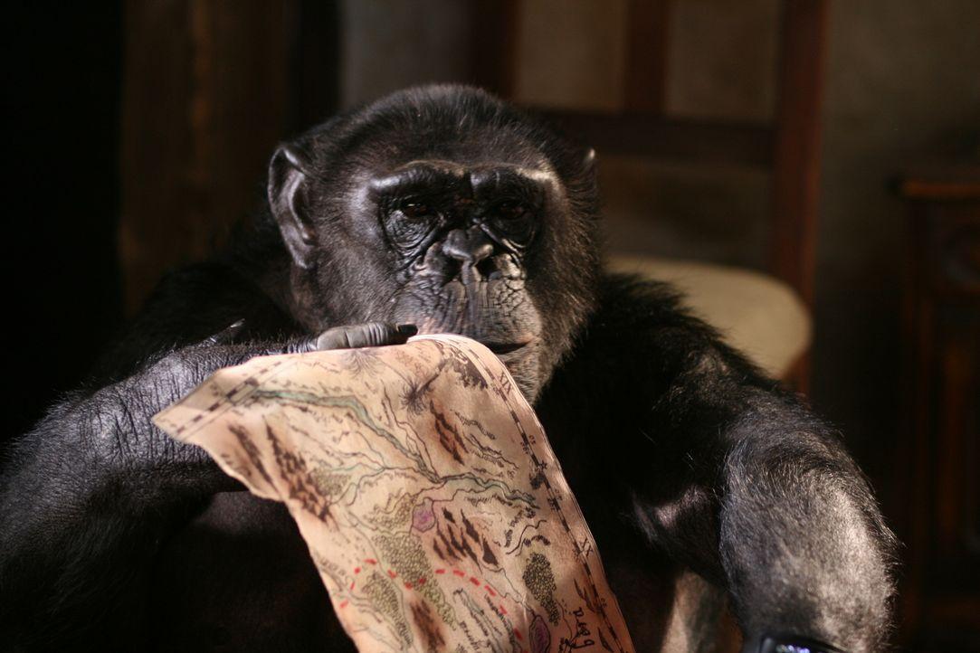 Der süße Affe will einfach nicht verstehen, dass man niemanden zwingen kann, zu lieben ...