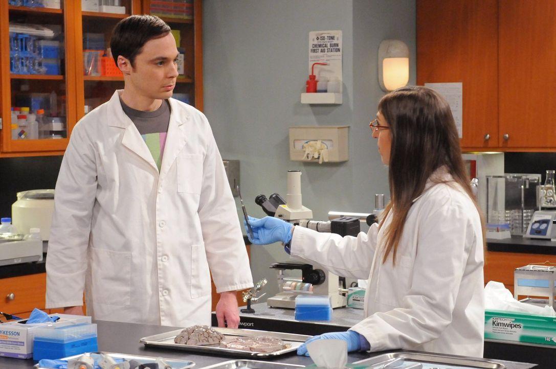 Während Bernadette möchte, dass Howard einen Ehevertrag unterschreibt, beschließt Sheldon (Jim Parsons, l.) bei Amy (Mayim Bialik, r.) im Labor ausz... - Bildquelle: Warner Bros. Television