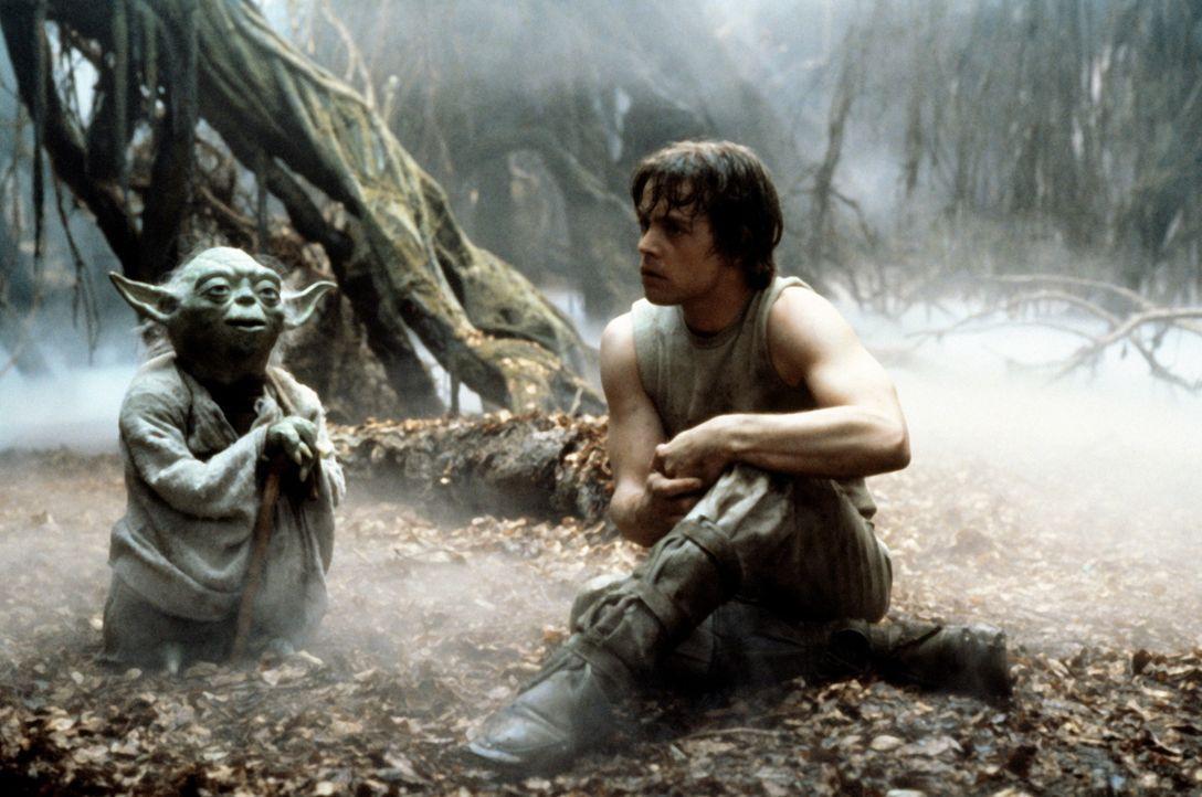 """Jedi-Meister Yoda (Frank Oz, l.) versucht Luke Skywalker (Mark Hamill, r.), den einzig legitimen Gebrauch der """"Macht"""" nahezubringen .... - Bildquelle: Lucasfilm LTD. & TM. All Rights Reserved."""