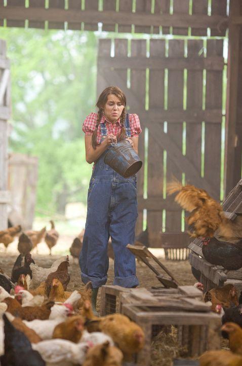 Auch das Füttern der Hühner will gelernt sein: Miley (Miley Cyrus) ... - Bildquelle: Sam Emerson Walt Disney Pictures.  All Rights Reserved