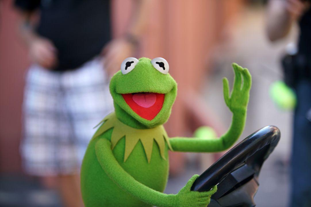 Miss Piggy hat schlechte Laune. Jetzt liegt es an Kermit, sich etwas einfallen zu lassen, um den Star der Show wieder aufzuheitern ... - Bildquelle: Andrea McCallin ABC Studios