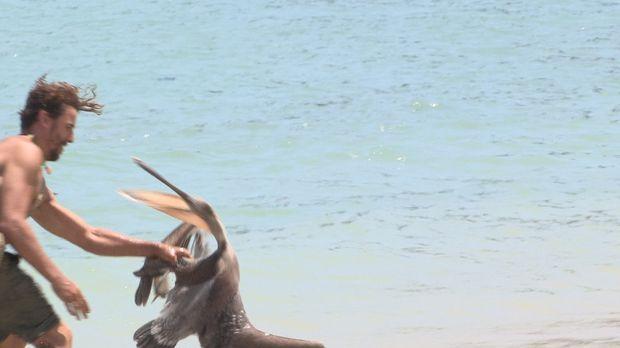 Wild Island Folge 3